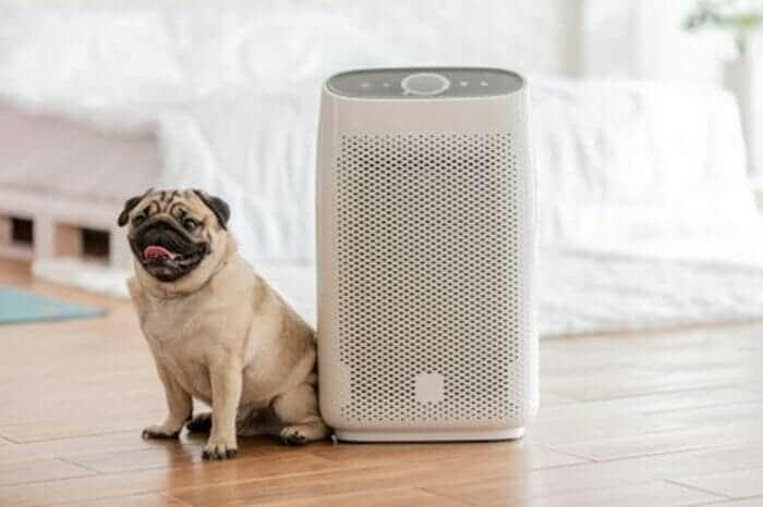 a pug sitting next to an air purifier